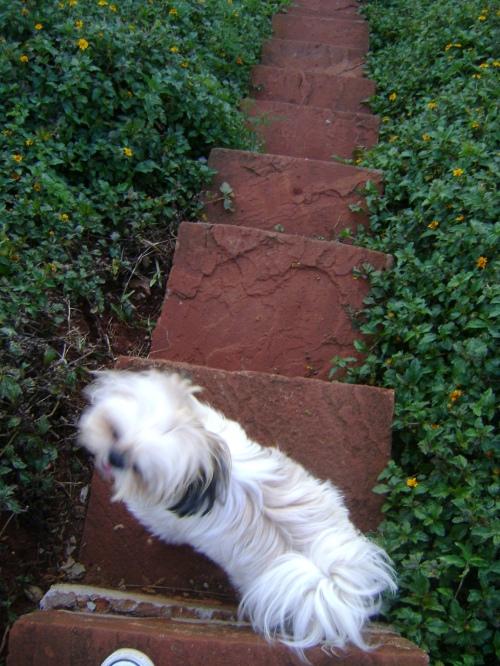 meu nenezinnho descendo a escada...^^)
